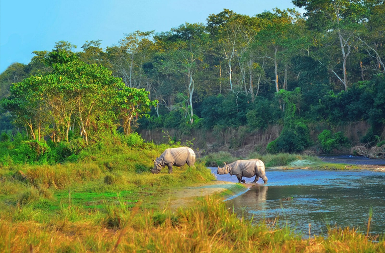 chitwan-national-park-a-close-encounter-with-wild-nepal